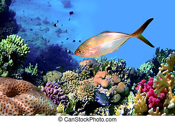 Corals reef in bay Eilat Red sea