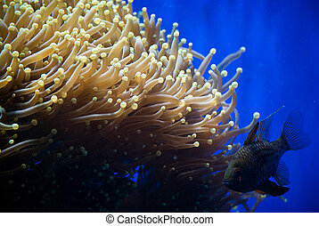 corals - aquarium with colorful tropical fish and corals