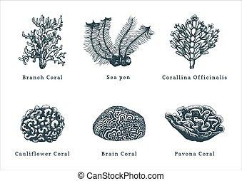 corals.collection, arrière-plan., vecteur, mer,...