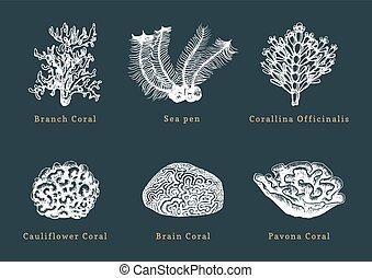 corals.collection, sombre, arrière-plan., vecteur, mer,...