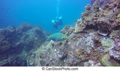 coraux, récif, doux, extrême, poissons, seascape., eau, sous...