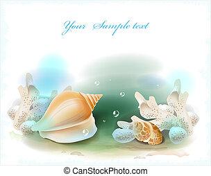coraux, seashells, fond
