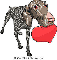 corazón, casta, perro, vector, kurzhaar, tenencia, rojo