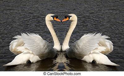 corazón, cisnes