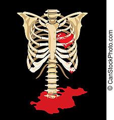 corazón, dentro, esqueleto, vector., rojo