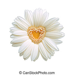 corazón, flor