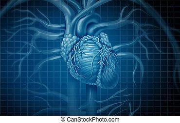 corazón, humano, plano de fondo