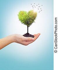 corazón, mujer, árbol, llevar a cabo la mano