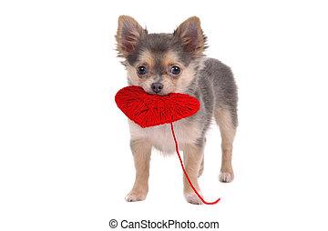 corazón, perrito, tenencia, rojo