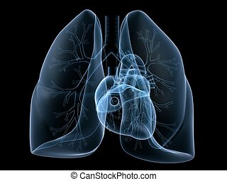 corazón, pulmón, radiografía