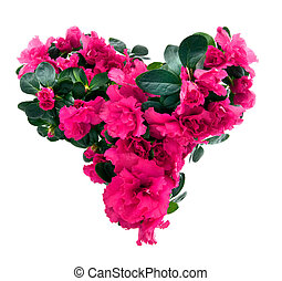 corazón, valentino, aislado, flores blancas, día, azalea