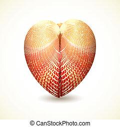 corazón, white., aislado, concha marina, formado