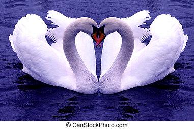 corazones, cisnes