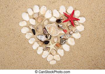 corazze marittime, su, il, spiaggia sabbiosa