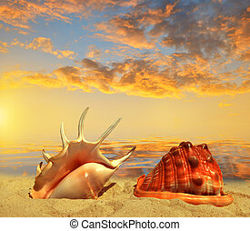 corazze marittime, su, spiaggia