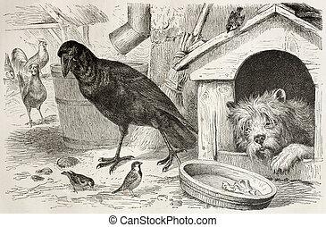 corbeau commun