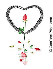 corda, cuore, nero rosso, rose