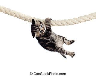 corda, engraçado, penduradas, bebê, gato