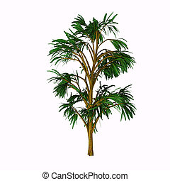 Cordaites borrasifolius Tree - Cordaites is an important...