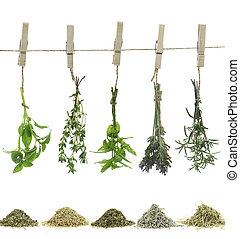 corde, herbes, frais, pendre