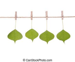 corde, série, feuilles, pendre, vert
