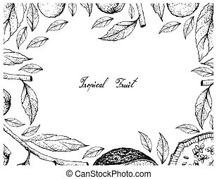 cordia, marco, mano, feroniella, caffra, fruits, dibujado,...