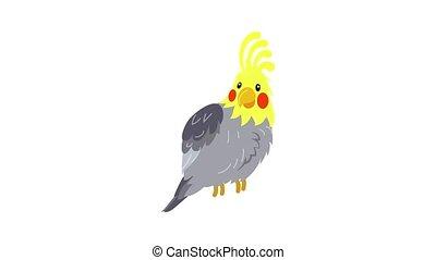 Corella parrot icon animation