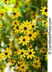 Coreopsis lowers - Tall Gold and Burgundy Coreopsis ...
