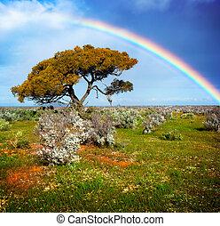 cores arco-íris