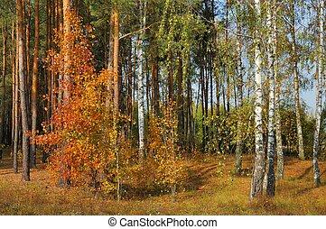 cores, de, outono