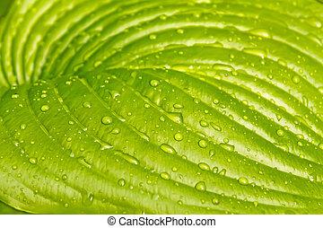 cores, grande, folha, luz verde