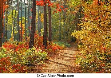 cores, outono