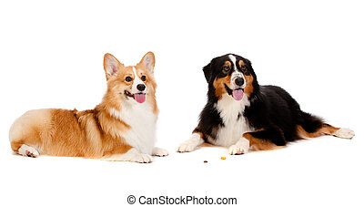 Two dogs obediently ignore the treats on the floor left by their owners