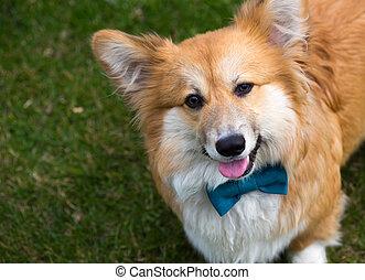 dog on a grass
