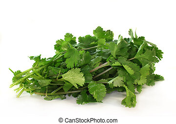 Coriander - a bunch of fresh coriander on a white background