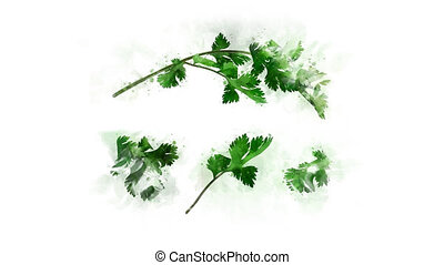Coriander animation for healthy eatingAnimation of the...