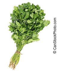 Coriander leaf  - Fresh bunch coriander leaf spice on white