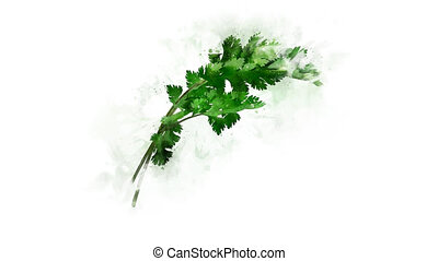 Coriander painted in watercolor and animated - Animated ...