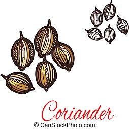 Coriander seed sketch of cilantro spice design