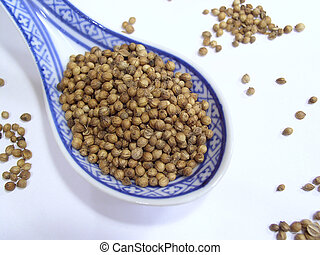Coriander seeds - Cooking spice