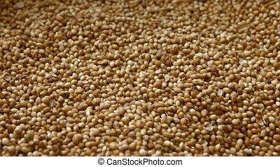 Coriander Seeds for Sale in Bulk at Public Market