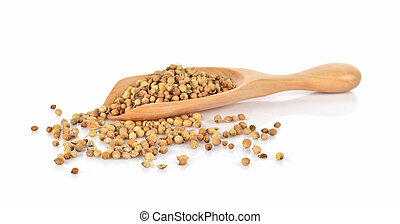 coriander seeds in a wooden spoon isolated on white background