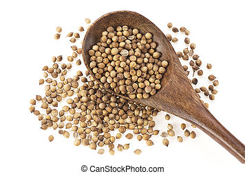 Coriander seeds in wooden spoon on white background