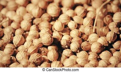 Coriander seeds macro shot - Multiple coriander seeds macro...