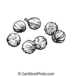 Coriander seeds, sketch style vector illustration isolated on white background