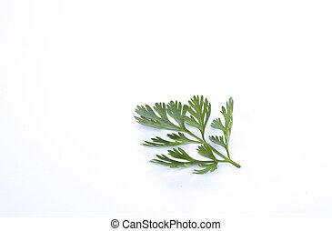 Coriander's leaf on white background