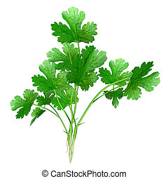 Coriandrum is a genus of herbs in the Apiaceae family ...