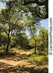 Cork oak forest in Arrabida Mountains