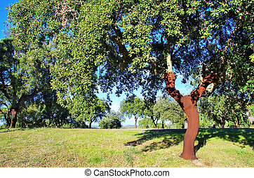 cork tree in Portugal, Alentejo region