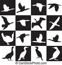 Cormorant background